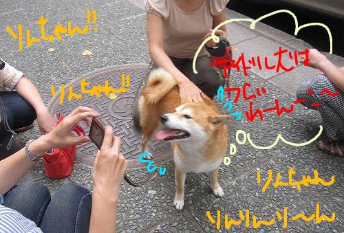 アイドル犬りんこ。