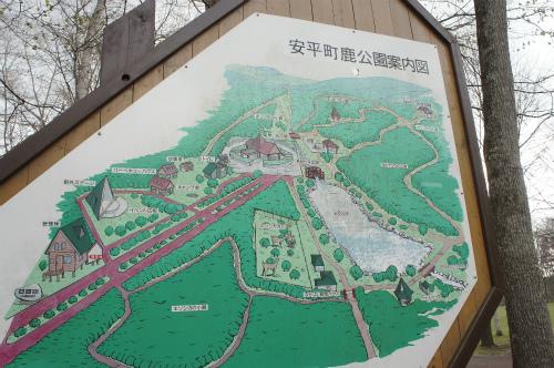 安平町の鹿公園