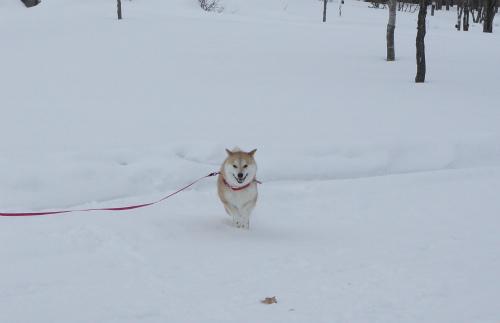 冬のノーザン