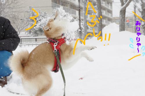 雪合戦顔面キャッチ
