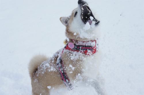 雪かけっこ