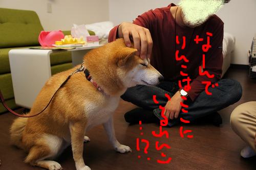 おたすけりんこさん参上!!