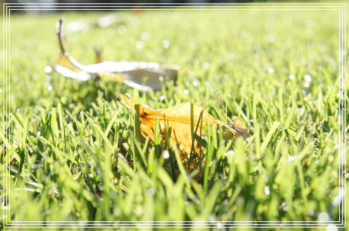 芝の葉っぱ