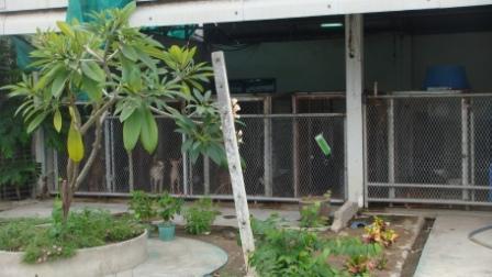 狂犬病舎1