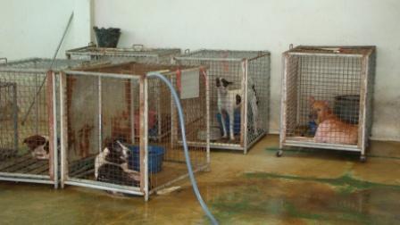 狂犬病舎2