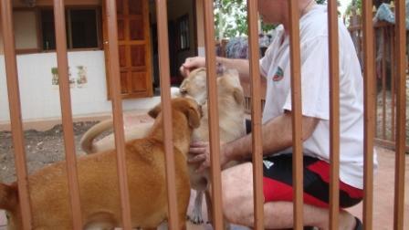 シニア&障害犬