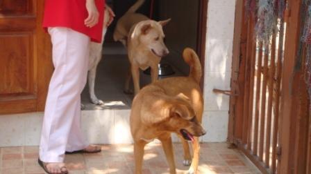 シニア&障害犬2