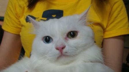 病院でみた猫