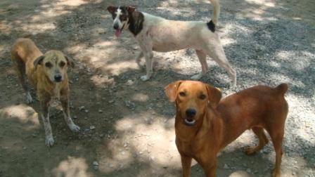 お寺1犬-1