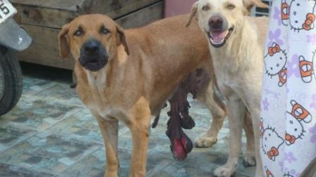 腫瘍の犬1