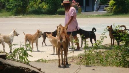 寺の犬たち1