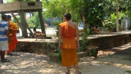 僧侶も手伝う