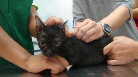 子猫ワクチン3