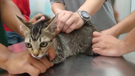 子猫ワクチン