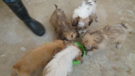 puppy2_20100423011038.jpg