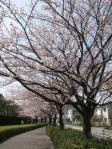 お花見2010 002