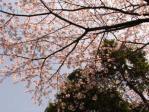 お花見2010 003