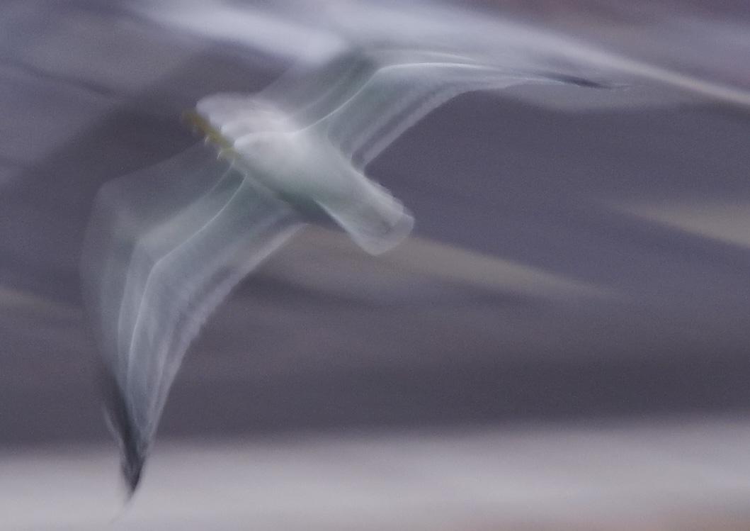 ウミネコ SS1/20秒