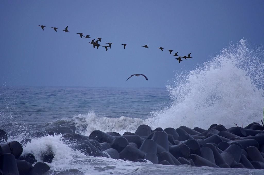 荒海に飛ぶ