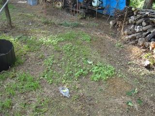 福島県須賀川市越久の梨農家さまの梨畑