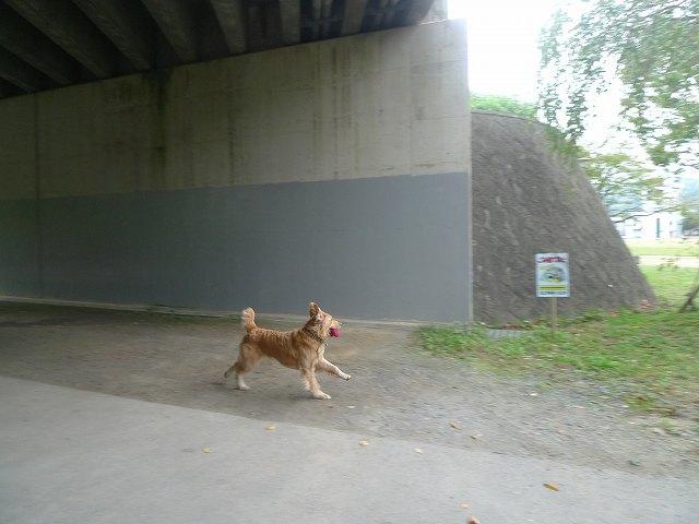 20101010