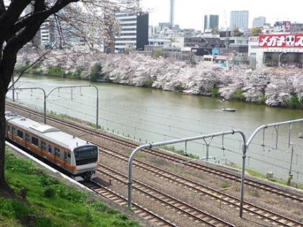 外濠公園の桜①