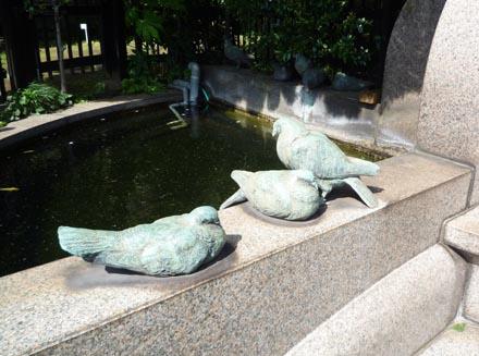 鳩山会館池の鳩②