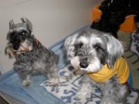 パテイ&ミニイです。20100212 1