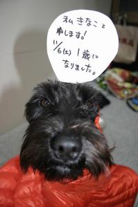2010/11/6 きなこ1歳 2