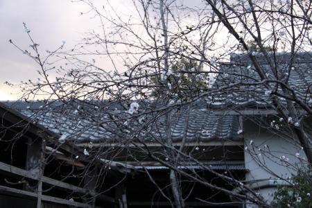DPP_18_20100101161410.jpg