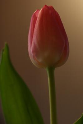 自分が人生で初めてプレゼントされた花って何だったかな...
