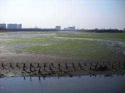 20100502谷津干潟