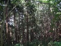 05自然研究路3