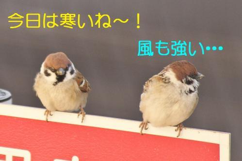010_20120325231326.jpg