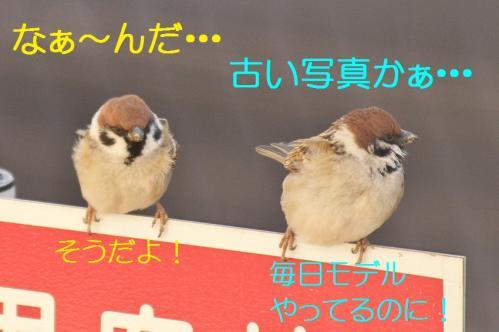030_20120325231326.jpg