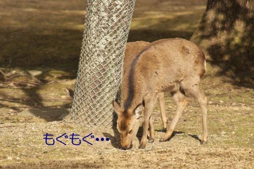 040_20120325231325.jpg