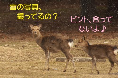 050_20120325231325.jpg