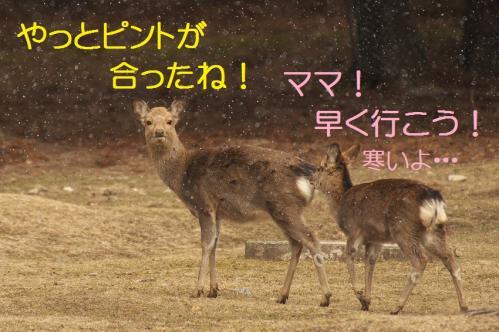 060_20120325231324.jpg