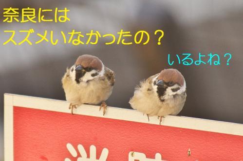 120_20120325231420.jpg