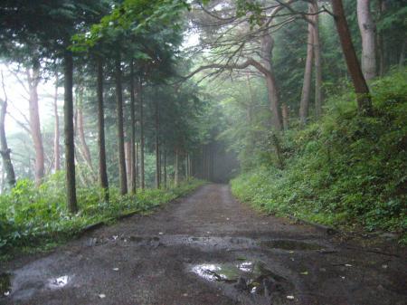 道志みち林道3
