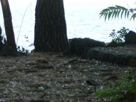 城ヶ崎公園2