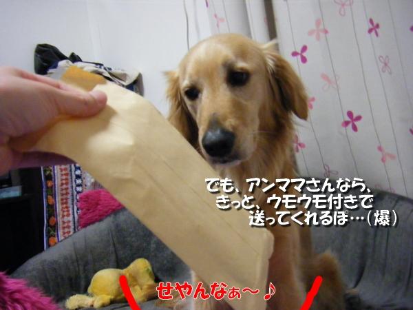DSCF7032_20110331000124.jpg