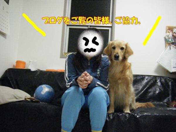 DSCF9003_20110319230837.jpg