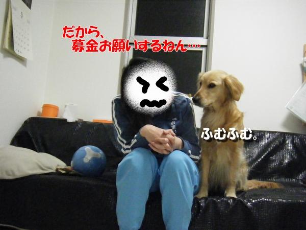 DSCF9008_20110319230836.jpg