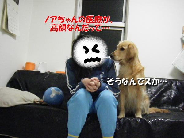DSCF9009_20110319230835.jpg