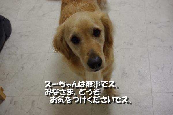 IMGP9183_20110312002914.jpg