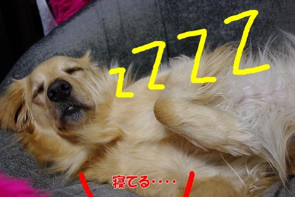 IMGP9201_20110325000504.jpg