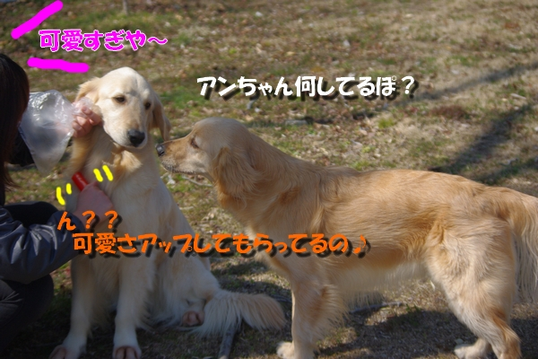 IMGP9330_20110316000609.jpg