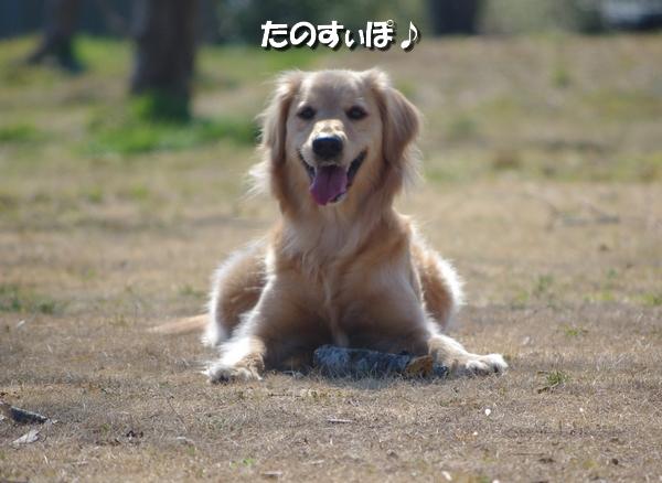 IMGP9369_20110315003612.jpg