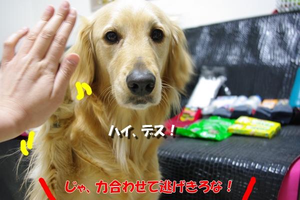 IMGP9448_20110319001039.jpg